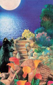 malta dreamer