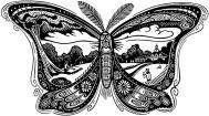 Moth-Baldwin